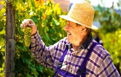 france_baden_wine_grower_maker_grapes_summer_hat_harvest_0